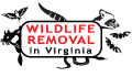 Wildlife Removal in Virginia
