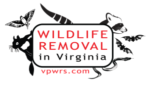 Wildlife Removal In Virginia Logo