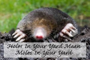 Mole and Garden